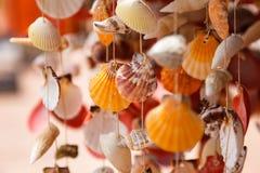 Les coquilles de mer se ferment en plage de Santa Maria au Cap Vert Image stock