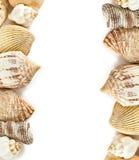 Les coquilles encadrent sur le blanc Photos libres de droits