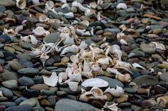 Les coquilles et le crustacé demeure sur la plage Image libre de droits
