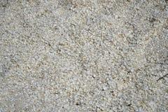 Les coquilles ont trouvé sur Shell Beach près de Denham WA photo stock