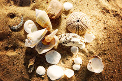 Les coquilles se trouvent sur le sable sur la plage entremêlée avec des pierres, une bague de fiançailles dans le sable - un cade Photos stock