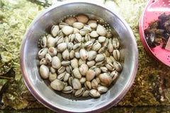 Les coquilles sont dans la cuvette de l'eau Photo stock