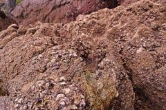 Les coquilles sur la mer bascule, modèle de nature sur le bord de la mer photo stock