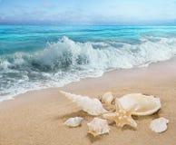 Les coquilles sur le bord de mer Image stock