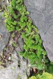 Les cordes de remorquage du vert, coup sur le votre obtiendront où votre aller photo libre de droits