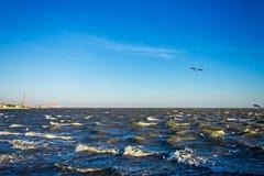 Les cormorans de mouettes volent au-dessus de la mer bleue faisante rage, fond de tempête Photos libres de droits