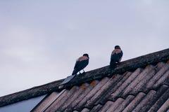 Les corneilles se reposent sur le toit de la maison par temps nuageux photographie stock