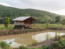 Les cottages sont placés au milieu des gisements de riz Photos stock