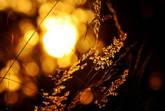 Les couleurs abstraites de fond brouillent la lumière du soleil de bokeh et les ombres foncées Image libre de droits