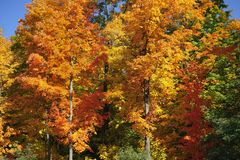 Les couleurs brillantes ornent le feuillage d'automne en Nouvelle Angleterre photos stock