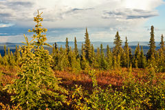 Chute en Alaska Images stock