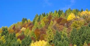 Les couleurs de l'éclat d'automne Photo libre de droits