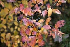 Les couleurs de l'automne photographie stock