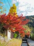 Les couleurs de l'automne Photos stock