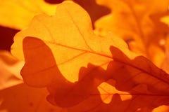 Les couleurs de l'automne Photo stock