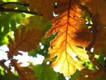 Les couleurs de l'automne Image stock