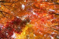 Les couleurs de l'automne Photos libres de droits