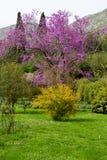 Les couleurs de la nature Photographie stock