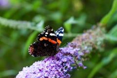 Les couleurs de la nature Image stock