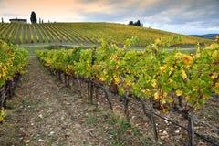 Les couleurs de la saison d'automne sur les vignobles toscans dans la région de chianti près de Florence photos libres de droits