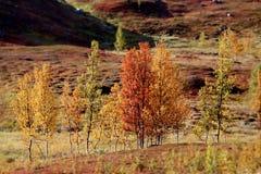 Les couleurs de la terre changent images libres de droits