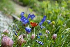 Les couleurs des prés au printemps photo libre de droits