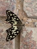 Les couleurs du papillon de nature Photos libres de droits
