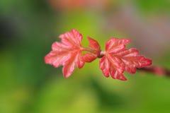 Les couleurs merveilleuses de l'automne vues au printemps Image libre de droits