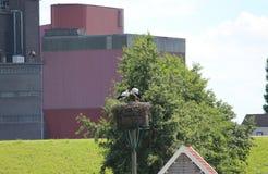 Les couples de cigogne à un élevage nichent dans Hitland avec l'usine sur le fond Image stock