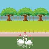 Les couples de cygne dans le lac aiment l'arbre en forme de coeur derrière Photographie stock libre de droits