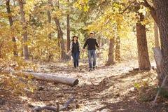 Les couples de sourire augmentent dans la forêt tenant des mains dans la distance Photos libres de droits