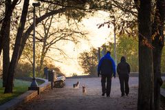 Les couples des amis avec des chiens marchant dans la ville se garent Photographie stock