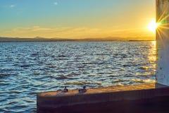 Les couples des canards contemplent le coucher du soleil dans l'Albufera de Valence photo libre de droits