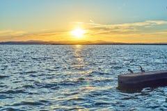 Les couples des canards contemplent le coucher du soleil dans l'Albufera de Valence photographie stock