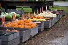 Affichage de courge d'automne Photos stock
