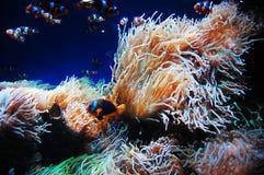 Les créatures sous-marin Photos stock