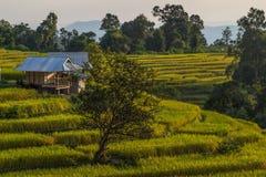Les crêtes de montagne aménagent en parc, pah Pong Piang dans le chiangmai de maejam, paddy Images stock