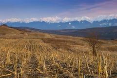 Les crêtes de neige de chaîne de montagne ont labouré la zone Photographie stock