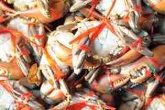Les crabes de mer étaient action attachée Photo stock