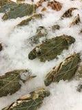 Les crabes frais photo libre de droits