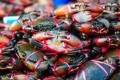 Les crabes rouges se font attraper Photographie stock