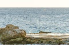 Les crabes sur une roche au Curaçao échouent image stock