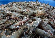 Les crevettes fraîches sur le marché de produits frais Photos stock