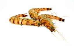 Les crevettes roses crues de tigre ont isol? images libres de droits