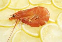 Les crevettes rouges Images libres de droits