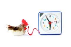Les crochets tôt d'oiseau obtient le proverbe de ver Photo libre de droits