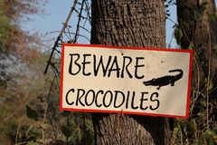 Les crocodiles de danger d'attention signent photos libres de droits