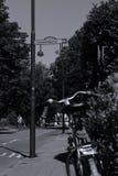 Les cyclistes montent sur la ruelle de bycicle dans Aalsmeer, Pays-Bas Photographie stock