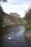 Les cygnes, les oies et le canard sur la rivière Suir par Cahir se retranchent Image stock