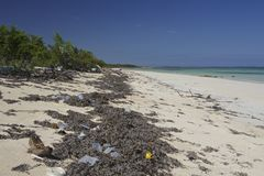 Les déchets ont lavé vers le haut d'une plage de Camagsuey, Cuba image stock